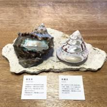 【海想】貝のアクセサリー